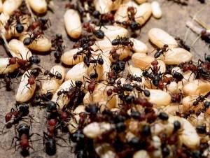 ant control johannesburg