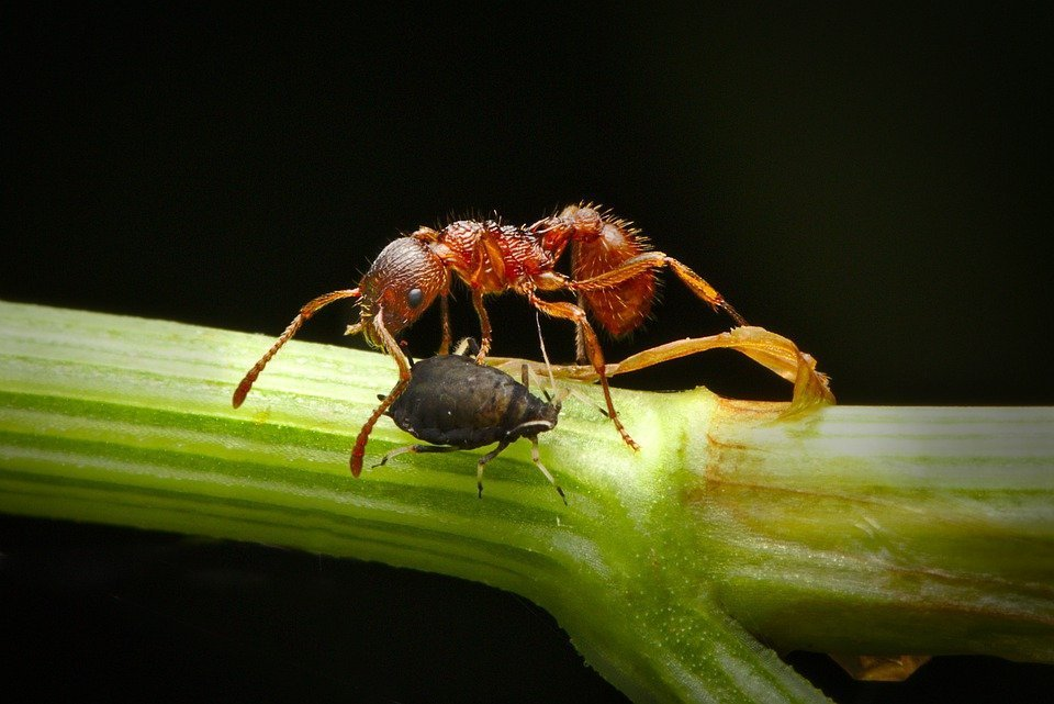 First Rains Bring Ants, Mosquitoes And Bugs Out Of Diapause